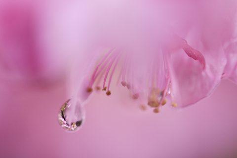 【マクロ写真】春想う あふるゝこころ ひとしずく