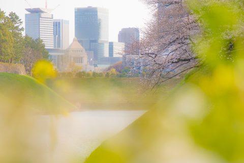 【花写真】春の香り