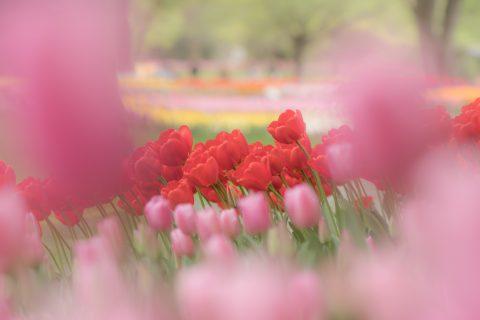 【花写真】咲き乱れて