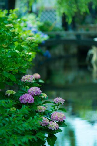 【花写真】道を尋ねて