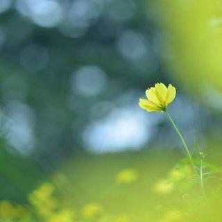 ベーシック Next  四季を味わう花写真