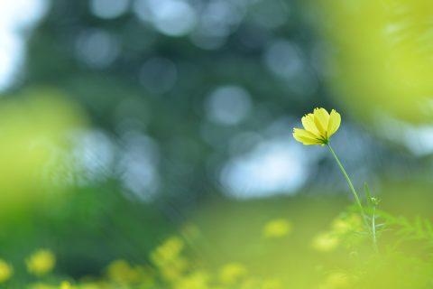 【花写真】明日へ